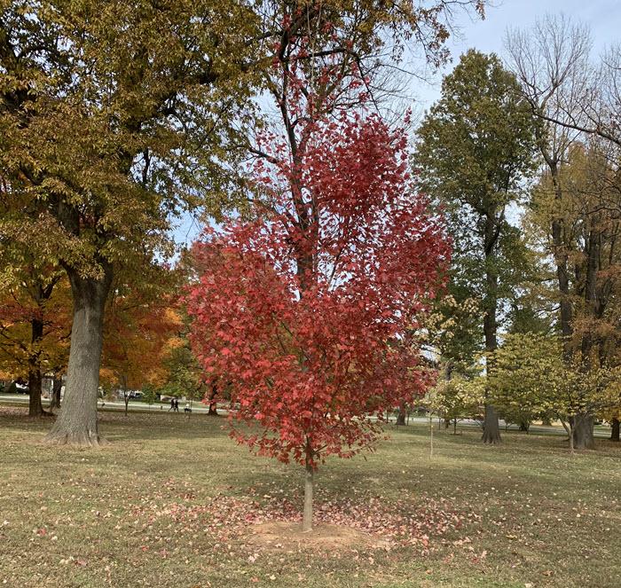 beautiful trees at phelps grove park