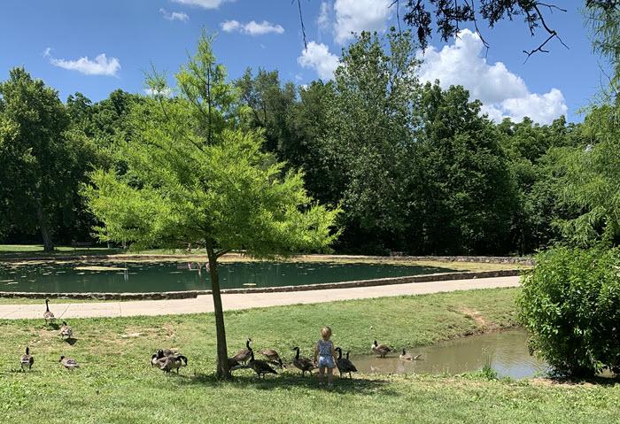 pond at doling park